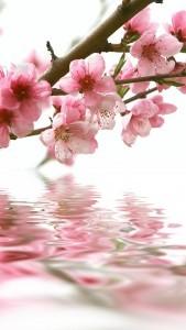 spring_05