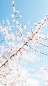 spring_07