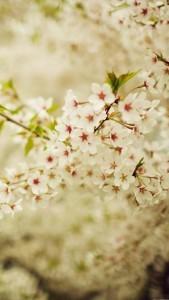 spring_09
