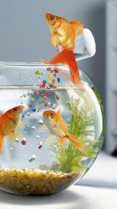 fish_aquarium_swimming_table_glass_89767_1080x1920