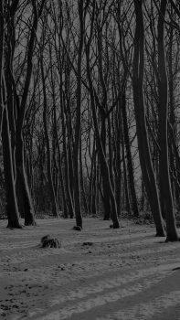 Cold-Winter-Forest-Snow-Nature-Mountain-Dark-iPhone-6-plus-wallpaper-ilikewallpaper_com