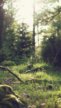 Forest-Green-Nature-Tree-iPhone-6-plus-wallpaper-ilikewallpaper_com