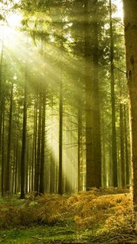 forest_4