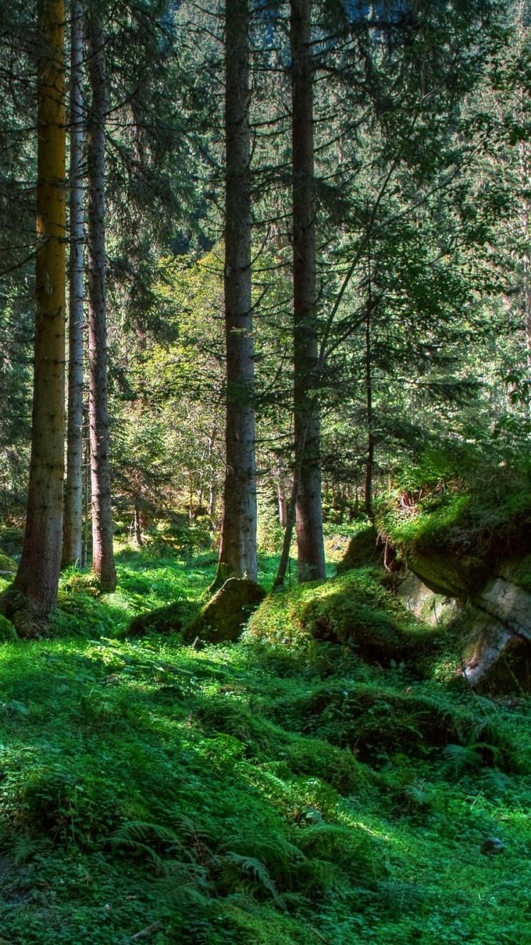 Фото красивого зимнего леса