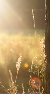Sunshine-Field-Tree-Light-Flare-Weed-iphone-5s-parallax-wallpaper-ilikewallpaper_com