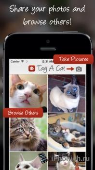 Tag A Cat - Instagram для котов