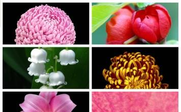 Обои для iPhone 6, цветы (9 штук)