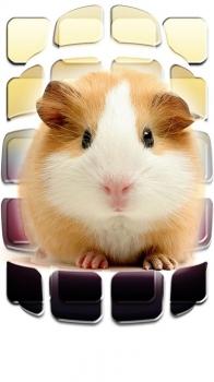 Обои для iPhone 6: Животные