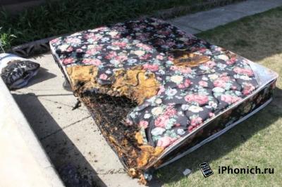 iPhone 5c опять воспламенился, теперь в Канаде