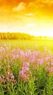 Cборник обоев для iPhone 6 Plus: природные пейзажи
