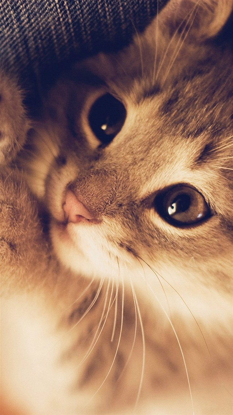 Cute-Cat-Kitten-Nature-Animal-iPhone-6-wallpaper-ilikewallpaper_com_750