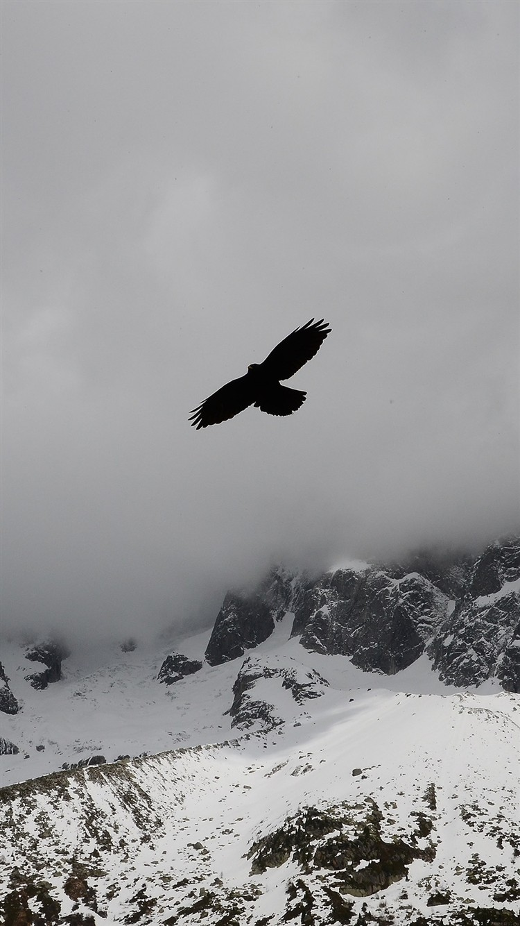 Eagle-Flying-Over-Winter-Snow-Mountains-iPhone-6-wallpaper-ilikewallpaper_com_750
