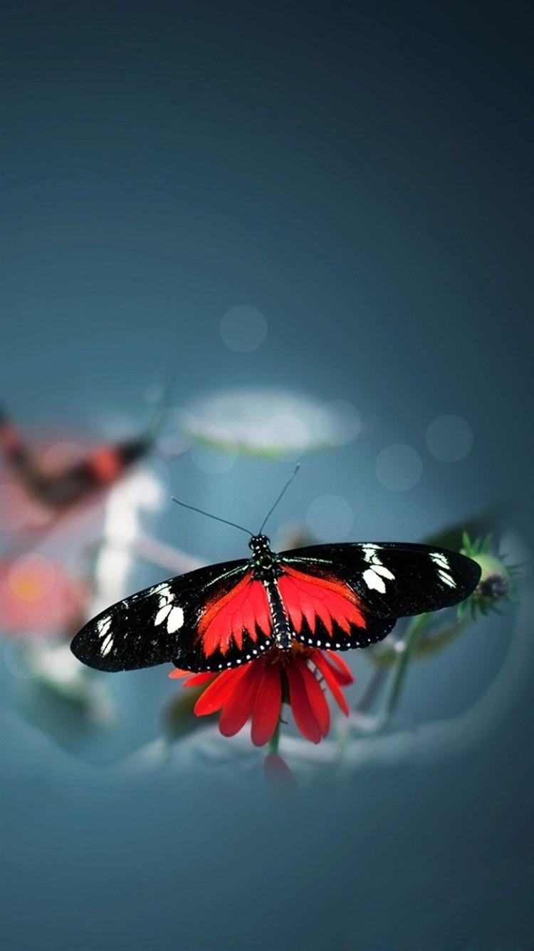 Nature-Beautiful-Butterfly-Animal-Flower-Water-Blur-iPhone-6-wallpaper-ilikewallpaper_com_750