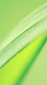 Fresh-Leaf-Macro-iPhone-6-plus-wallpaper-ilikewallpaper_com