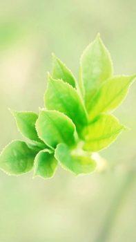 Pure-Bokeh-Plant-Branch-Macro-iPhone-6-plus-wallpaper-ilikewallpaper_com